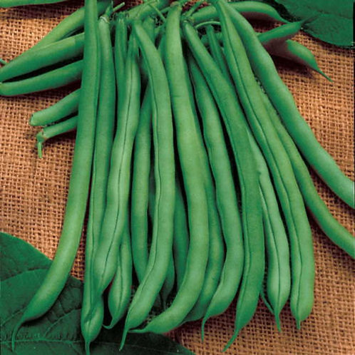 Green Beans (Small)
