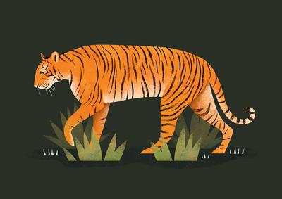 Tiger | Emily Dayson