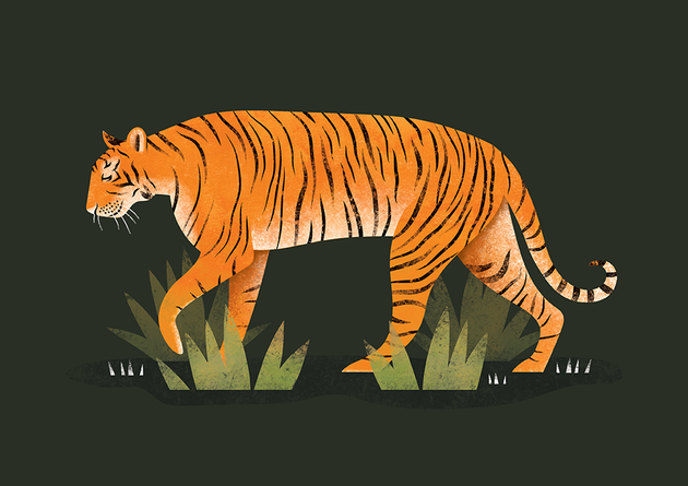 Tiger | Personal