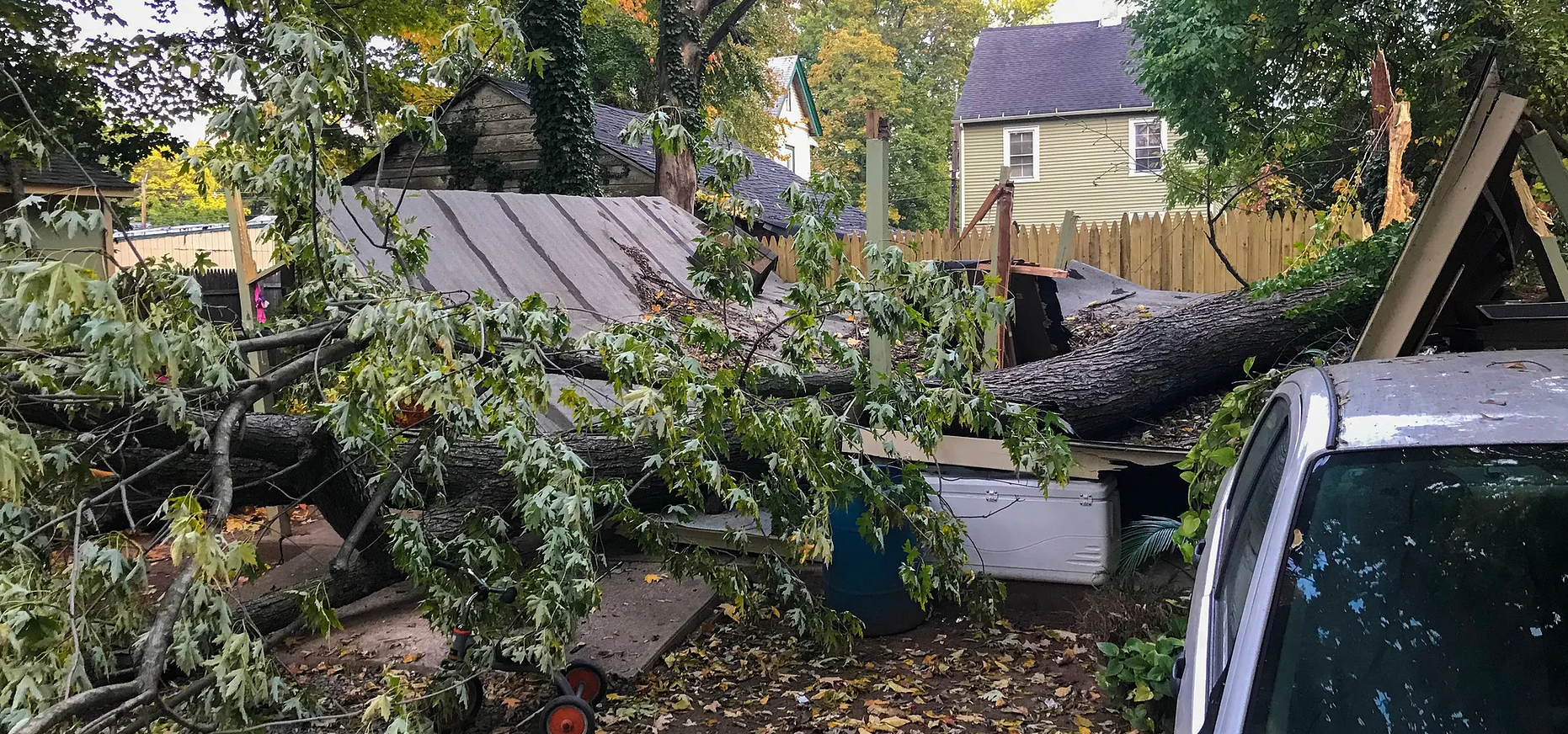 Emergency Tree Removal Service