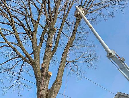 tree pruning.png