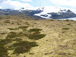 CLIMADAPT: Adaptation to past and present Climate Change in Arctic-Alpine Plants