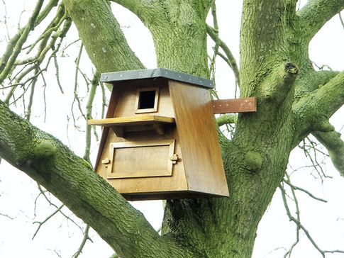 External Barn Owl
