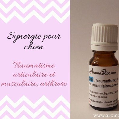 Traumatisme, Douleur articulaire et musculaire, Arthrose - Chiens - Aroma/Homéo