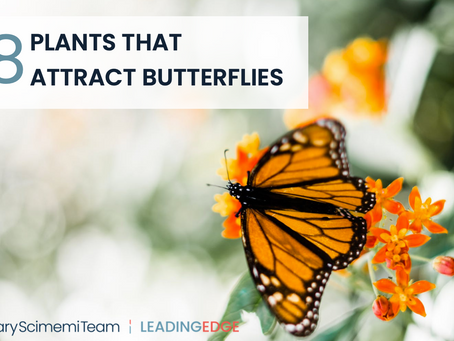 8 PLANTS THAT ATTRACT BUTTERFLIES