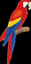 Papagei_Logo.png