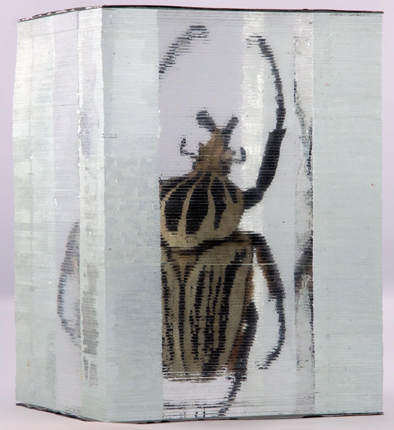 Gotiathus orientalis