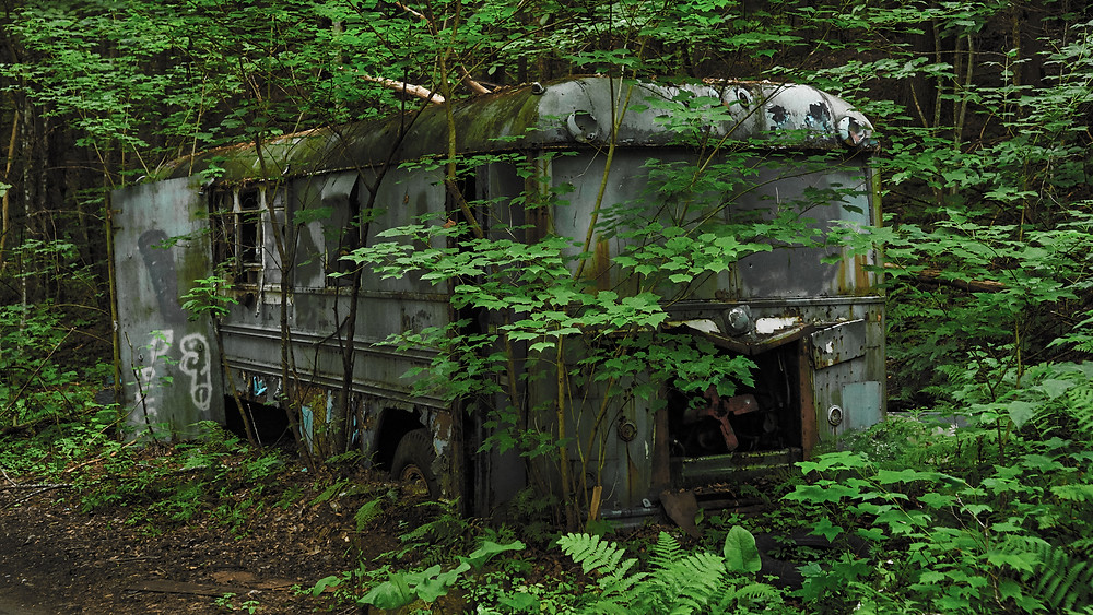 Abandoned bus nestled into an encroaching forest of lush greens