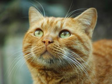 Aufstellung mit Tieren: Ein Erlebnisbericht meiner Klientin und ihrem Kater Felix