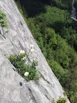 Stage grande voie d'escalade - Dalle du Thuet