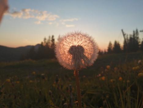 Secrets des plantes sauvages : 9 aout 2020