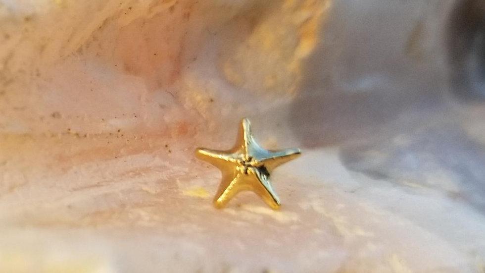 Detailed Sea Star by Anatometal