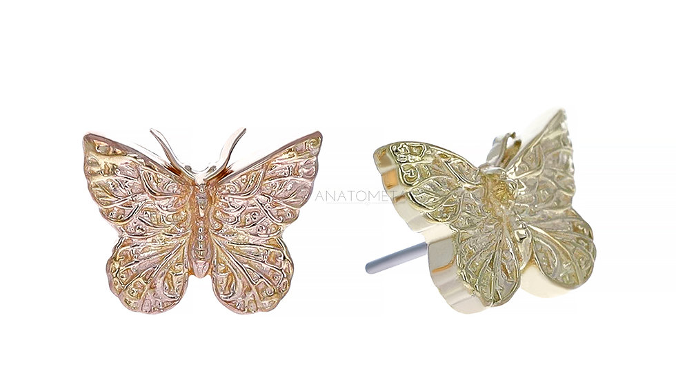 Detailed Butterfly