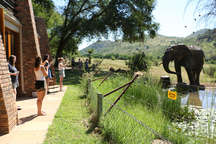 Nkombi at Pilanesberg.JPG