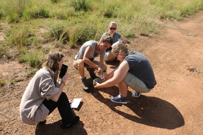 Nkombi doing tortoise measurements.JPG