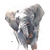 Elephant Watercolor, 12x16, 2019
