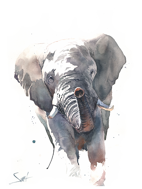 Elephant Watercolor Print 3