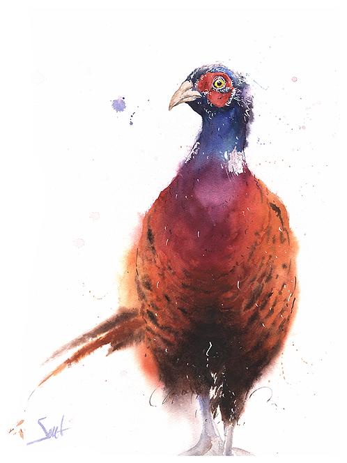 Ring Necked Pheasant Original Watercolor Painting
