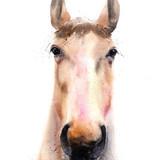Watercolor Horse, 13x19, 2016