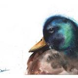 Watercolor Duck, 14x11, 2016
