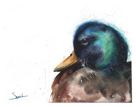 Mallard Duck Watercolor Print