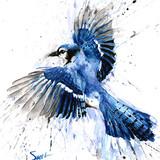 Blue Jay Watercolor, 16x20, 2014