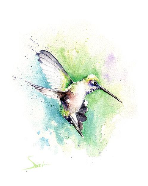 Black Chinned Hummingbird Watercolor Print