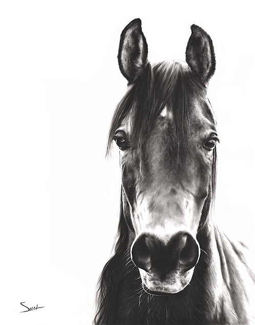 Horse Oil Painting Print