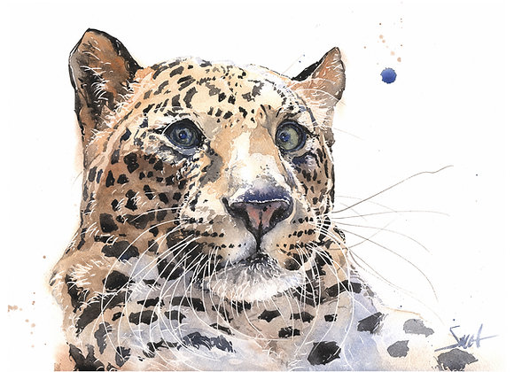 Anthony Leopard Original Watercolor Painting