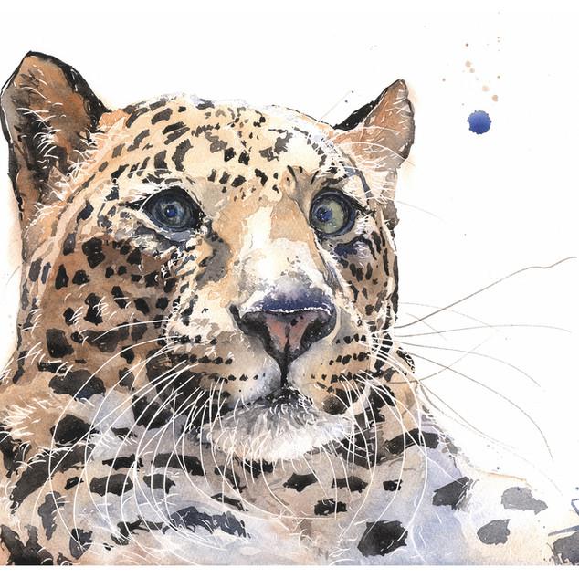 Anthony Leopard