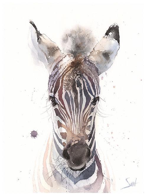 Zebra Colt Watercolor Print