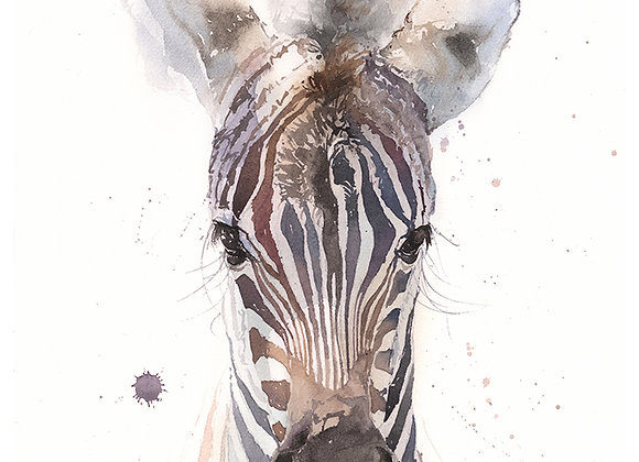 Zebra Colt Watercolor Print