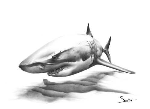 Great White Shark Dry Brush Painting