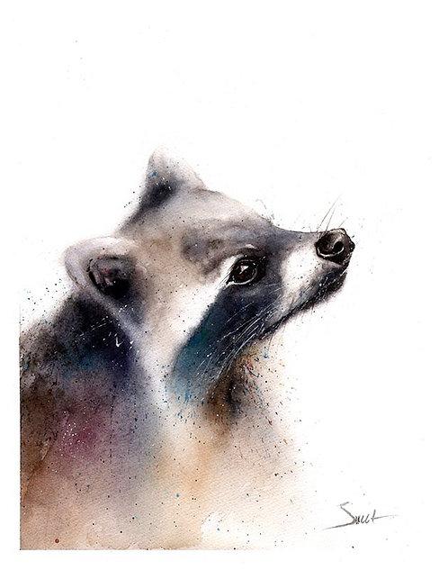 Raccoon Watercolor Print