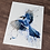 Thumbnail: Blue Jay Watercolor Print