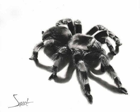 Tarantula Oil Painting Print
