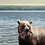 Thumbnail: Original 'Grizzly' Oil Painting