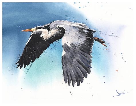 Blue Heron Watercolor Print