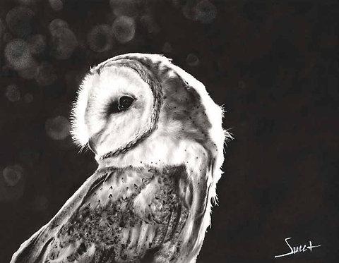 Barn Owl Oil Painting Print