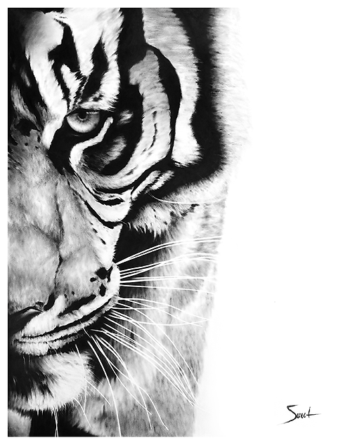Bengal Tiger Dry Brush Painting