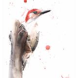 Redheaded Woodpecker Watercolor, 11x14, 2019