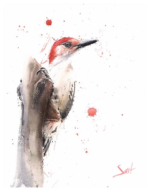 Red Headed Woodpecker Watercolor Print