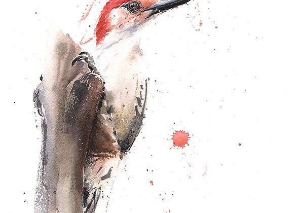 Red Headed Woodpecker Watercolor Print