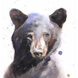 Black Bear Watercolor, 11x14, 2019