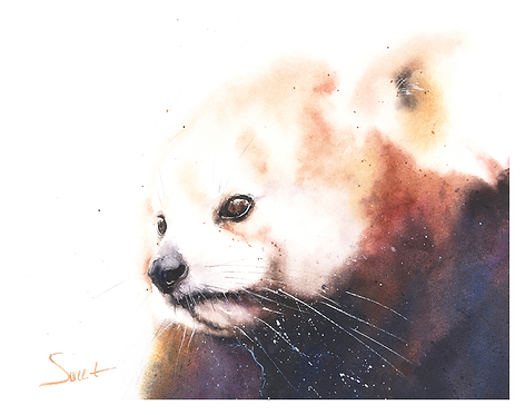 Red Panda Watercolor Print