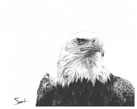 Bald Eagle Oil Painting Print