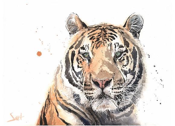 Rajah Tiger Original Watercolor Painting