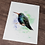 Thumbnail: Broad Billed Hummingbird Watercolor Print