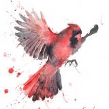 Cardinal Watercolor, 11x14, 2018