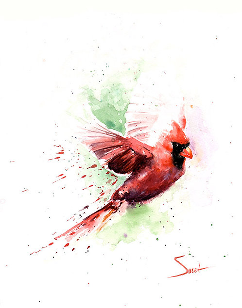 Flying Cardinal Watercolor Print